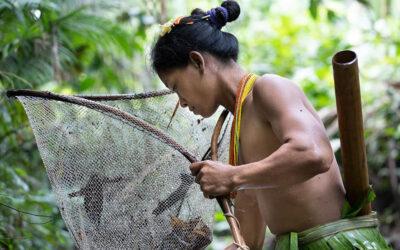 Indigenous livelihoods in focus